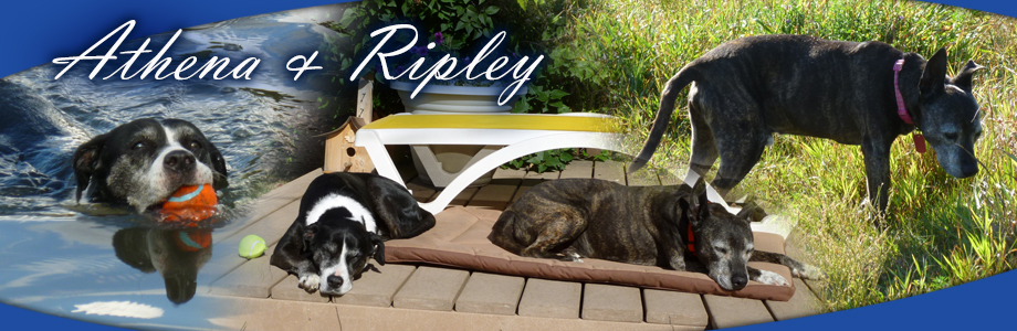 Athena and Ripley Rescue Dog Calgary Alberta Canada