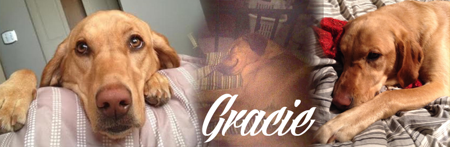 Gracie Rescue Dog Calgary Alberta Canada
