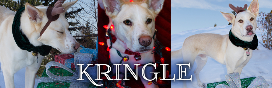 Kringle Rescue Dog Calgary Alberta Canada